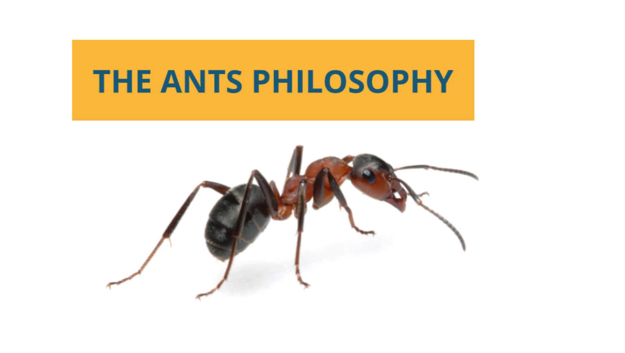 The Ants Philosophy -  the mentality of ants | Bizsuccor
